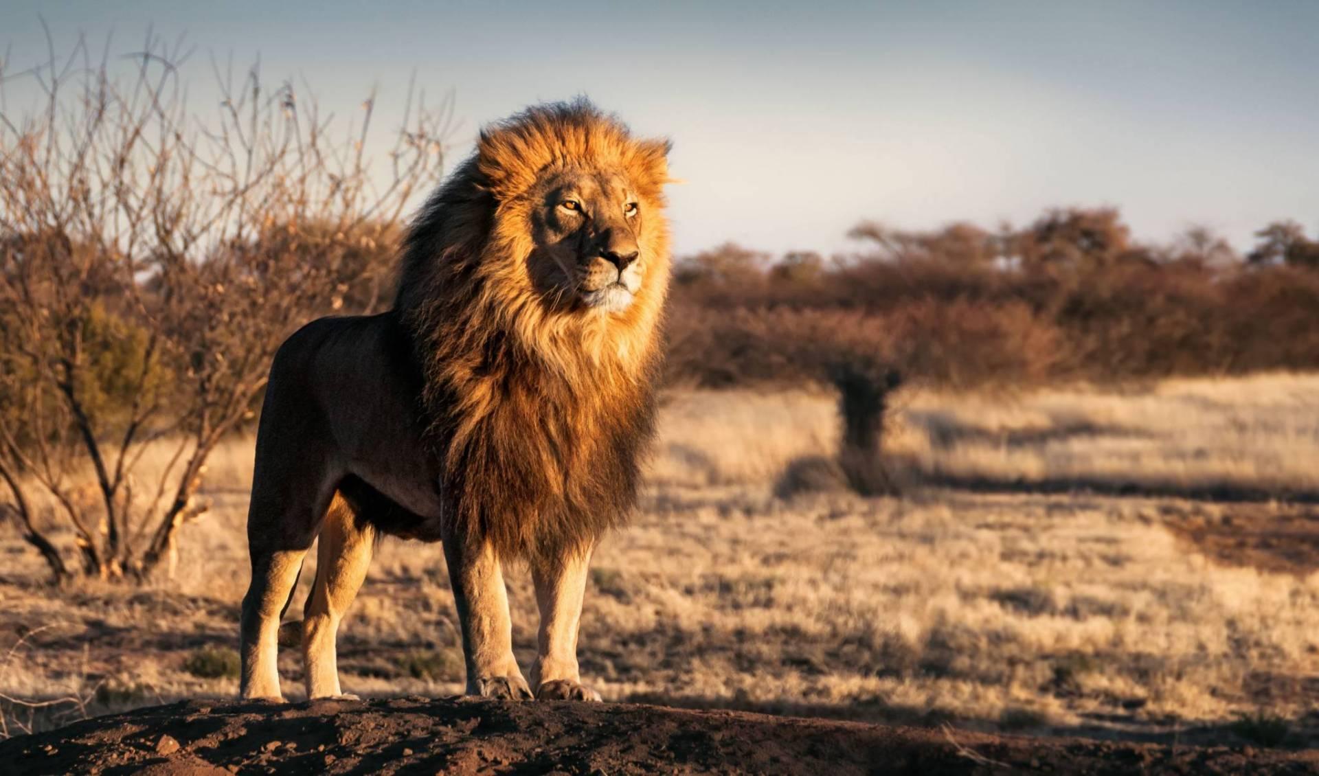 Afrika natuur en Safari